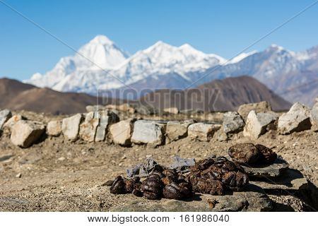 Animal dung being dried. Traditional fuel in rural Nepal.
