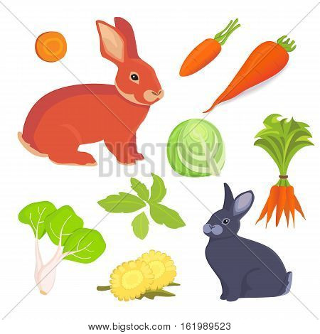 Hare and rabbit cartoon illustration. Rabbits food vector collection set