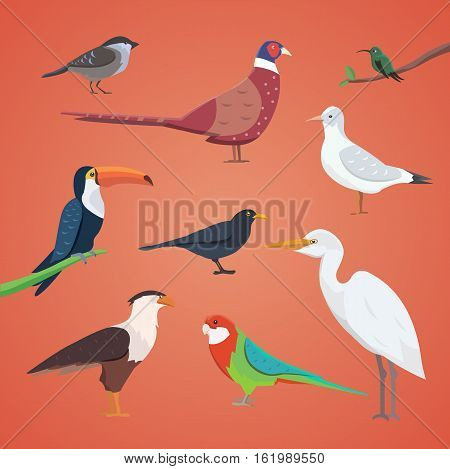 set of different birds isolated. vector collection cartoon birds eps10