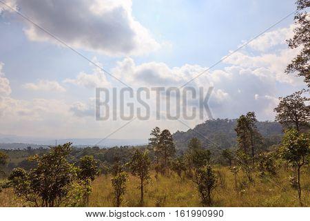Savanna Forest With Sky