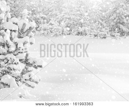 Winter landscape with snowy trees in shades of gray
