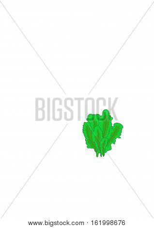 Bright green  algae on a white background.