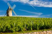 vineyards with windmill near Chenas, Beaujolais, Burgundy, France poster