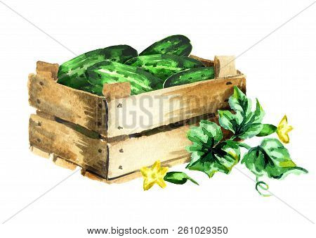 Box With Cucumbers. Watercolor Hand Drawn Illustration, Isolated On White Background