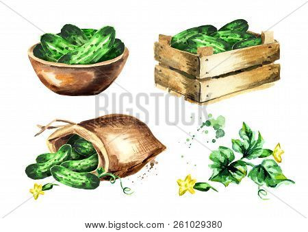 Cucumber Set. Watercolor Hand Drawn Illustration Isolated On White Background