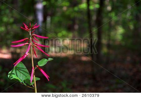 Cigar Flower
