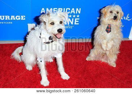 BEVERLY HILLS - SEP 29: Happy, the Hallmark Dog, Guest Dog at the 2018 American Humane Hero Dog Awards at The Beverly Hilton Hotel on September 29, 2018 in Beverly Hills, California