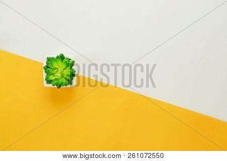 Table Top View Aerial Image Of Minimal Background Concept.flat Lay Tree In A Pot On Modern Rustic Ye