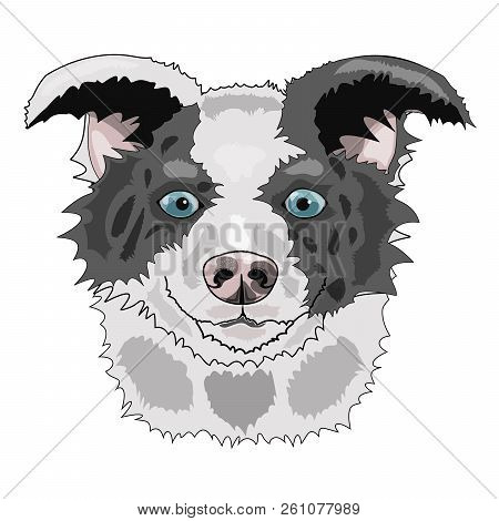 Vector Illustration Of A Dog With Blue Eyes. Scetch Vector Graphics Colored Drawing. Breed Border Co