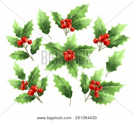 Christmas Holly Branches Realistic Illustrations Set. Holly Tree Twigs With Green Leaves And Red Ber