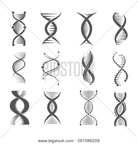 Dna Spiral Icons. Helix Human Technology Research Molecule And Chromosome Medical And Pharmaceutical