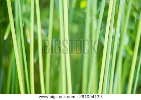 Abstract Green Plant Background - Grass Stems