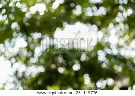 Bokeh Of Light From Leaves Of Tree In Forest