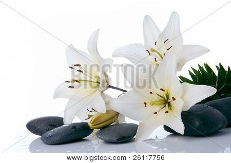 madonna lilies with spa stone on white background