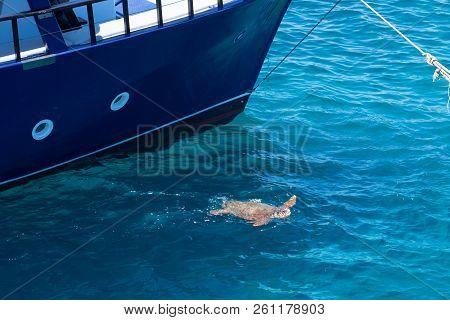 Kareta Turtle Swimming In The Greek Sea Near Ship.