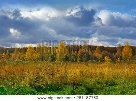 Autumnal Nature, Wild Scenery With Trees In Fall Forest