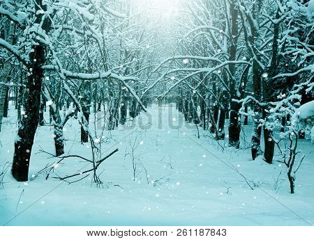 Winter Magic Nature, Snowy Evening Forest Landscape