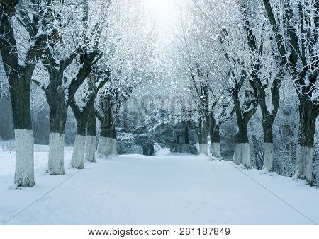 Winter Nature, Magic Snowy Forest A Landscape
