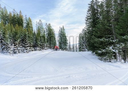Winter Landscape With Snowy Green Fir Trees, A Meadow Covered With Snow, A Road, And A Snow Groomer,