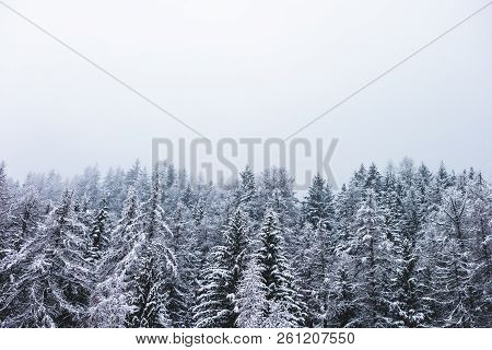 Winter Season Snow Covered Trees Evergreen Forest Nature Landscape Background