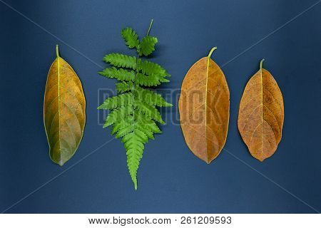 Fern Leaf And Orange Leaves On Black Background. Autumn Leaf On Table Top View Photo. Fall Seasonal