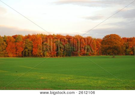 Autumn Field (Close)
