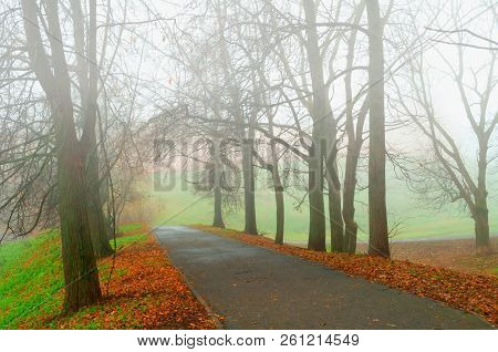 Fall landscape - somber foggy fall park alley with bare fall trees and dry fallen orange leaves. Fall foggy landscape scene, fall nature in foggy weather