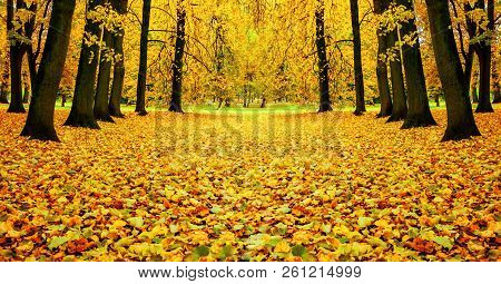 Fall colorful landscape - fall trees and orange fallen leaves on the ground. Picturesque fall city park, colorful panoramic fall landscape, fall leaves on the ground, fall nature scene