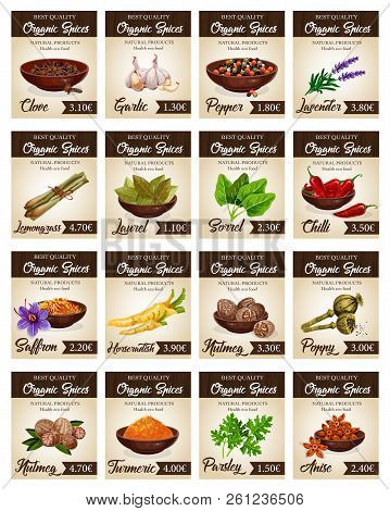 Hot Spices Price Cards Templates. Vector Clove And Garlic, Pepper And Lavender, Lemongrass And Laure