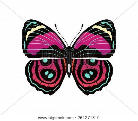 Riodinidae Butterfly Metalmark With Metallic-looking Spots Wings, Morpho Butterfly Of Pink And Red C