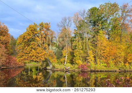 Beautiful Multicolored Trees In The Autumn Park