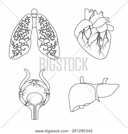 Isolated Object Of Body And Human Icon. Set Of Body And Medical Stock Vector Illustration.