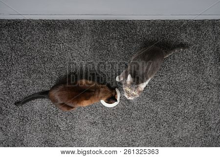 Two Cats Eating From The Same Feeding Bowl Sharing Cat Food