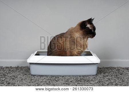 Housebroken Cat Sitting In Cat's Toilet Or Litter Box