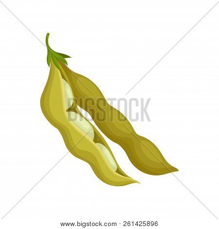 Soya Bean, Healthy Vegetarian Food Vector Illustration On A White Background
