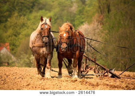 Plowing Horses