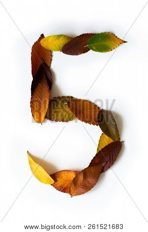 Number 5 of colorful autumn leaves. Cardinal number five mades of fall foliage. Autumnal design font concept. Seasonal decorative beautiful type mades from multi-colored leaves.