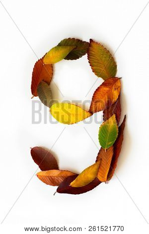 Number 9 of colorful autumn leaves. Cardinal number nine mades of fall foliage. Autumnal design font concept. Seasonal decorative beautiful type mades from multi-colored leaves.