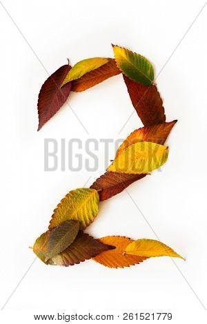 Number 2 of colorful autumn leaves. Cardinal number two mades of fall foliage. Autumnal design font concept. Seasonal decorative beautiful type mades from multi-colored leaves.