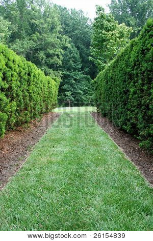 View down a green hedge corridor