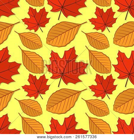 Seamless Pattern With Maple And Beech Autumn Leaves. Vector Illustration.