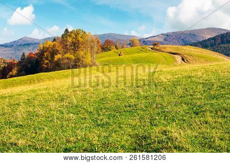 Wonderful Mountain Landscape In Fall Season. Forest With Colorful Foliage On The Grassy Hill. Alpine
