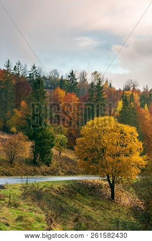 Tree With Golden Foliage By The Road In Mountains. Wonderful Fall Season Scenery.