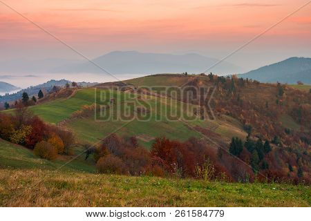 Rural Area In Mountains At Dawn. Orchard In Fall Colors On Hill. Beautiful Autumn Scenery With Cloud
