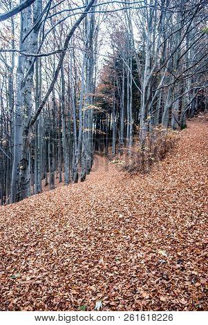 Autumn Forest With Trail Covered By Fallen Leaves Bellow Velka Kykula Hill In Moravskoslezske Beskyd