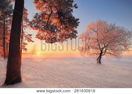 Winter Landscape. Winter Nature In Park. Beautiful Winter Sunset With Frosty Trees Illuminated By Pi
