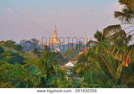 The golden stupa of Shwedagon Zedi Daw temple in light morning haze behind the lush greenery of garden, Yangon, Myanmar. poster
