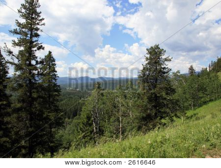 Forest In Canadian Rockies