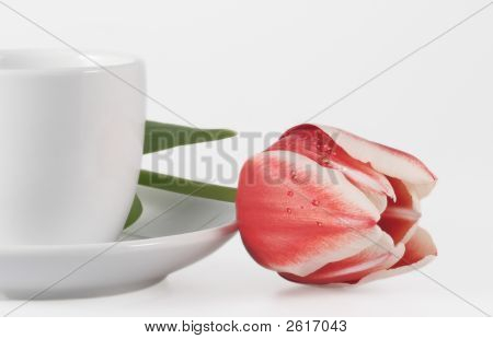 Tulip And Coffee Cup