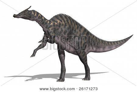 Saurolophus Dinosaur